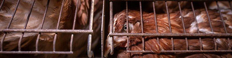 Ce spune despre noi felul degradant în care tratăm animalele?
